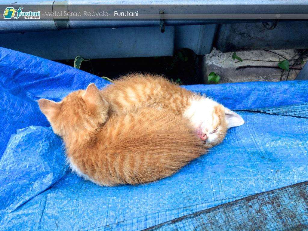スクラップの上ですやすやZzzz……可愛い子猫に癒されよう!