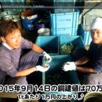 【銅相場情報 2015.9.14】1tあたり1万円の上がり⤴