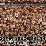 【銅相場情報 2020.8.19】1tあたり3万円上がりの74万円に改定⤴